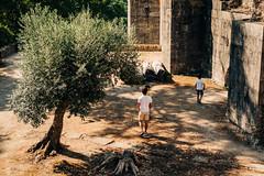 Tree in Sun (Poul_Werner) Tags: portugal tomar vitusrejser 53mm ferie rejse travel santarémmunicipality santarémdistrict pt