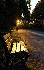 A walk in the park (HonleyA) Tags: greenheadpark park sunset bench seat fujifilm xpro2