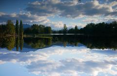Up is down 2 (An Arzhig) Tags: miroir glass eau lac lake water arbres trees reflet reflect occitanie france panasonic lumix gx800 50mm