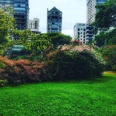 42422015_268986383749650_6599520402261863804_n (juliane.segursky) Tags: parque árvores árvore tree árbol árboles flor flores são paulo brasil brazil