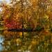 Japanese Gardens and Manito park in Spokane, WA