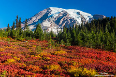 Rainier Above Fall Colors (Don Geyer) Tags: mountrainierabovefallcolorsinparadisepark mountrainiernationalpark cascaderange washington usa cascades northamerica waâ us unitedstates glacier glaciers habitat environment naturalenvironment habitats environments naturalenvironments landscape landscapes meadow meadows mountain mountains natural outdoor outside outdoors peak peaks scenic scenery scenics volcano volcanic volcanos wild uncultivated wilderness backcountry wilds ecology ecosystem ecosystems nature fall autumn falls autumns morning mornings wa
