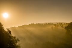 Foggy morning (UpuautX) Tags: sony a7iii 90mm morning fog nebel giebenach baselland morgen