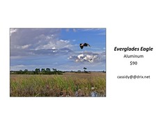 "Everglade Eagle • <a style=""font-size:0.8em;"" href=""https://www.flickr.com/photos/124378531@N04/45312921282/"" target=""_blank"">View on Flickr</a>"