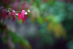 Fall (Micro_Op) Tags: nikon fall tree nikkor tamron canada ontario mushroom trees