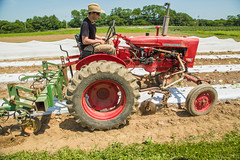 20180607acp130sp063.jpg (ukagriculture) Tags: horticulture weedcontrol cultivator weeds cultivation weed lexington kentucky