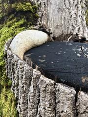 Stammen -|- Trunk life (erlingsi) Tags: erlingsi iphone erlingsivertsen trunk stamme nature