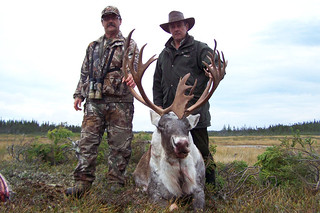 Newfoundland Caribou Hunt, Moose, Bear Hunting 17