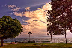 Elements (Alfred Grupstra) Tags: nature tree sea sunset sky scenics landscape outdoors summer cloudsky beach coastline beautyinnature sunlight sun nopeople blue dusk water parkmanmadespace