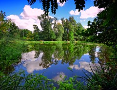 Reflected trees (Tobi_2008) Tags: teich pond spiegelung reflection bäume trees sommer summer grosenhain sachsen saxony deutschland germany allemagne germania