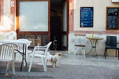 On the move (bold.) Tags: aiguamúrcia tarragonaprovince spain es santa creus santacreux canoneos6d canonef50mmf14usm canon ef 50mm f14 usm prime lense lens summe catalunya cataluña catalonia dogs bar cafe street life vsco mood