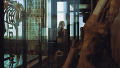 Musée Fragonard (matthieu.findinier) Tags: musée fragonard france squelettes 1766