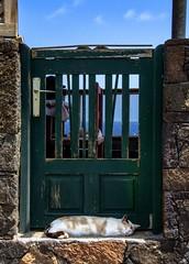 Nap / Siesta (López Pablo) Tags: cat sleep door lacaleta elhierro canary islands spain green sky cloud nikon d7200