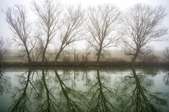 trees (Roberto.Trombetta) Tags: italy italia venice fiume fog river winter still venezia veneto lagoon laguna swamp stagno lago lake water path acqua parco park reflection sony 7rii alpha batis225 batis zeiss 25 carlzeiss art fineart amazing stunning beautiful landscape paesaggio 7rm2 allaperto romantic tree forest peaceful cloudy albero cielo calma quiet calm wood wooden mist haziness misty bare bank naked spoglio