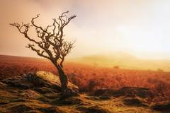 Autumn Tactics (Rich Walker75) Tags: dartmoor tree trees tor landscape landscapes landscapephotography devon autumn colour sunrise canon england efs1585mmisusm eos eos80d outdoor