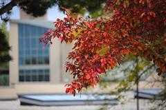 Green Bay Fall Colors-8