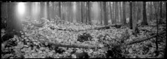 Playing with lights (cotnari73) Tags: rss6x17 pinhole nolens acros d76 woods forest nature longexposure