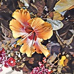 Toronto Ontario ~ Canada ~ Edwards Gardens ~ Botanical Garden ~  Hibiscus Rosa thumbnail