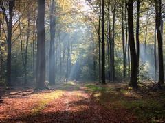 rays of light (Thomas Heuck) Tags: wald forest greifswald licht light sonnenstrahlen rays sunbeams laub leaves bäume trees natur nature landschaft landscape olympus em1markii