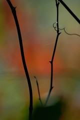 shades of autumn (courtney065) Tags: nikond200 nature landscapes pondscape autumn fall autumncolors blurred bokeh green red orange foliage flora branchlets wetland