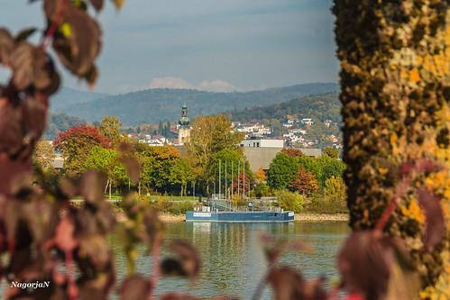 Goldener Herbst an der Donau