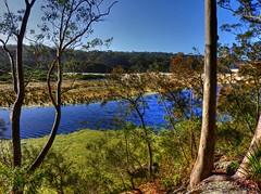 Forest and stream V (elphweb) Tags: hdr highdynamicrange nsw australia forest bush tree trees wood woods spottedgum spottedgums spottedgumtrees waterway water stream creek weed algae