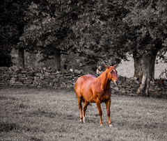 Horse (JuanJ) Tags: nikon d850 lightroom art bokeh nature lens light landscape happy naturephotography outside people white green red black pink skyportrait location architecture building city square squareformat instagramapp shot awesome supershot beauty cute new flickr amazing photo photograph fav favorite favs picture me explore interestingness friends dof animal horse shakervillage ky kentucky august 2018