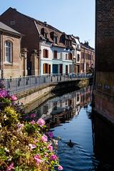 "La balade de ""coin-coin"" (Katell Ar Gow) Tags: eau reflet maisons amiens canal"