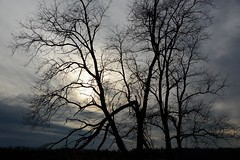 close of the day (courtney065) Tags: nikond600 nature landscapes silhouettes treesilhouettes trees branches soft artistic daysend sun sunlight clouds dusk moody dark