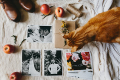 our autumn cares (Yuliya Bahr) Tags: autumn cat stilllife red apple pictures packaging gift photographs prints custom home