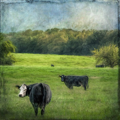 I was looking back to see (David DeCamp) Tags: farm field rural landscape grass green cattle cows textured topazimpression2 his