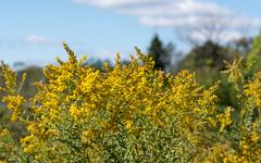 Windy Wildflowers (Dotsy McCurly) Tags: windy wildflowers autumn sky park scenery nature beautiful landscape nj newjersey nikonz7 smileonsaturday seasonsflora