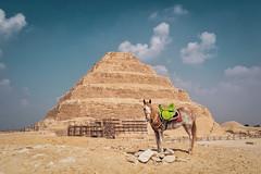 Saqqara (u c c r o w) Tags: pyramid horse arabian arab egypt egyptian saqqara saccara africa african desert sahara green saddle clouds ancient pferd