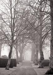 ParkAlley_sepia_5-7 (minipix.se) Tags: park alley sepia black white bw mist fog foggy misty