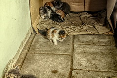0012 (gill4kleuren - 17 ml views) Tags: pussy puss poes chat mieze katje gato gata gatto cat pet animal kitty kat pussycat poezen