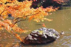 Dreamy Autumn Afternoon (arbivi) Tags: autumn fall foliage koyo momiji japanese maple tree red orange bridge koishikawakorakuen garden iidabashi tokyo japan canon 60d tamron arbivi raymondviloria