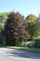 DSC_1895 (PeaTJay) Tags: nikond750 reading lowerearley berkshire gardens outdoors nature flora fauna plants flowers trees shrubs bushes foliage
