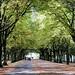 Hoe groen is mijn stad