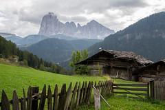 _DSC6433 (frangher) Tags: dolomiti montagna landscape paesaggio mountain valgardena ortisei sangiacomo altoadige sassolungo nikon d3100 italia italy viaggi verde green flickrtravelaward