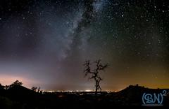Night Glow from Fresno (NimonPro.com) Tags: nikon night nightsky stars astrophotography tree milkyway fresno california