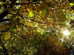 Tree (Anna Gelashvili) Tags: пейзаж небо тбилиси дерево tree nutsubidzeplato tbilisi georgia ხე ნუცუბიძისპლატო თბილისი საქართველო ფოთლები leaf forest wood park листва осень leaves შემოდგომა ყვითელიფოთლები sky landscape
