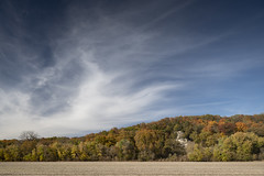Missouri River Bluffs (Notley Hawkins) Tags: httpwwwnotleyhawkinscom notleyhawkinsphotography notley notleyhawkins 10thavenue fall autumn foliage trees bluff bluffs cliff cliffs riverbottoms bottomland field farmfield farm afteroon lateafternoon sky clouds horizon tiltshift 2018 october missouririverbottoms landscape outdoors canontse24mmf35lii callawaycounty callawaycountymissouri