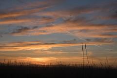 _DSC9508.jpg (thomasresch) Tags: sonneaufgang sun nordhaide panzerwiese nebel hartelholz sunrise sonne