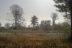 _IMG2440 (Henk de Regt) Tags: the netherlands gelderland natuur nature landscape grass bos forest trees zonsopkomst sunset sundown zonsondergang swamp nederland veluwe landschap gras water bomen moeras