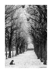Avenues all lined with trees © (wpnewington) Tags: iancurtis joydivison neworder vienna avenue ceremony isolation monochrome europe austria wien