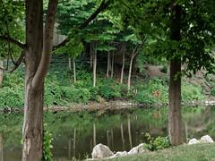 Trees and More Trees (joeldinda) Tags: islandpark parks river secondisland michigan grandriver grandledge eatoncounty tree omd em1ii 4204 reflection em1 august omdem1mkii olympus 2018 park