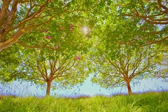 Sunburst (Christina's World Off and On) Tags: trees frame forest green scenic landscape sunburst losangeles creative california colors nature light brightcolors brilliant colorful grasses leaves outdoors plants touristattraction unitedstates usa view