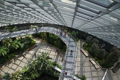 Inside the Cloud Forest (Herculeus.) Tags: 2013 aerialwalkway arboreteum architecture buildings cloudforest curves fall gardens gardensbythebay geometricpatterns indoor inside landscape lines manmen march nikkoraf2485mmf28 nikond600 people photostream shadows sightseers singapore womanwomen 5photosaday