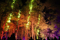 2018 - 4.10.18 Enchanted Forest (146) (marie137) Tags: forest lights trees show marie137 bright colourful pitlochry treeman attraction visit entertainment music outdoors sculptures wicker food drink family people water animation