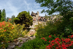 Cragside Gardens (Matthew_Hartley) Tags: cragside gardens garden house home statelyhome nationaltrust northumberland uk britain sony a7 iii a7iii fullframe 2870 2870mm